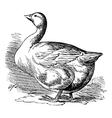 Bremen Goose vintage engraving vector image