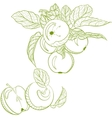 Monochrome drawing apples and apple branch vector image vector image