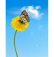 Nature background with butterfly on a yellow vector image vector image