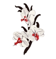 Painted bouquet of garden orchid flowers on white vector image