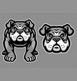 bulldog mascot set vector image vector image
