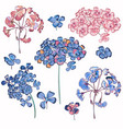 collection geranium flowers for design vector image vector image