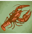 engraving crayfish retro vector image vector image