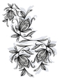 Floral pattern rose black and white vector image vector image