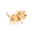 little dog with spotted body and shiny eyes puppy vector image vector image