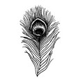 peacock feather sketch vector image