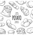 potato drawing square banner organic fresh food vector image vector image