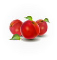 red peaches on a white back vector image