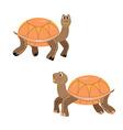 Turtles cartoon orange smile isolated vector image vector image