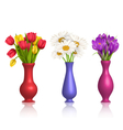 Tulips chamomiles and crocuses in vases with vector image