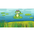 A smiling frog in the pond vector image vector image
