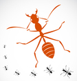 ant vector image