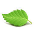 green tree leaf on small stem with ribbed edge vector image vector image