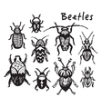 Set of hand drawn ink bugs beetles vector image
