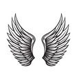 wings set hand drawn detailed wings collection vector image vector image