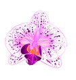 Beautiful orchid purple and white flower closeup vector image
