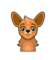 cute lama face cartoon style on white background vector image