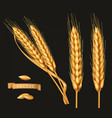 ears of wheat 3d icon set on black vector image vector image