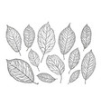 hand drawn tree leaves nature foliage sketch vector image