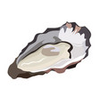 oyster in shell icon isolated on white background vector image vector image