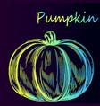 vegetable pumpkin sketch vector image vector image
