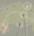 Floral background dandelions vector image vector image