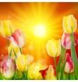 Floral Background Sunset Landscape EPS 10 vector image vector image