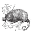 possum vintage engraving vector image