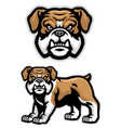 set english bulldog mascot vector image vector image