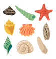 summer tropical objects marine shells in cartoon vector image