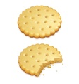 crispy cookies isolated on vector image vector image