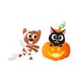 flat cat sitting at pumpkin mummy dog vector image