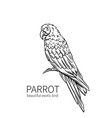 parrot exotic bird vector image