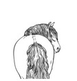 portrait horse with long mane looks back view vector image vector image