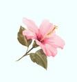 watercolor hibiscus vector image vector image
