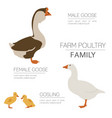 Poultry farming goose family isolated on white