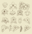 set outline flowers plants with petals and leaves vector image