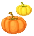 Yellow and orange pumpkin on a white background