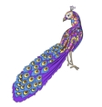 Stylized hand drawing peacock vector image