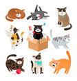 cartoon cats isolated on white vector image vector image
