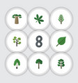 flat icon natural set of maple forest jungle and vector image vector image