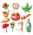 ginseng hand drawn set vector image