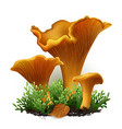 chanterelle mushrooms vector image vector image