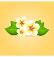 Frangipani tropical flower vector image vector image