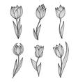 hand drawn tulips set vector image vector image