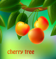 Yellow juicy sweet cherries on a branch for your vector image