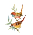 Watercolor forest birds on twig vector image