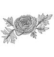 decorative ranunculus vector image vector image