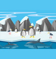 penguins and other animals in north pole vector image