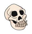 animal monkey skull cartoon vector image vector image